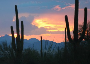 sunset on the desert photo